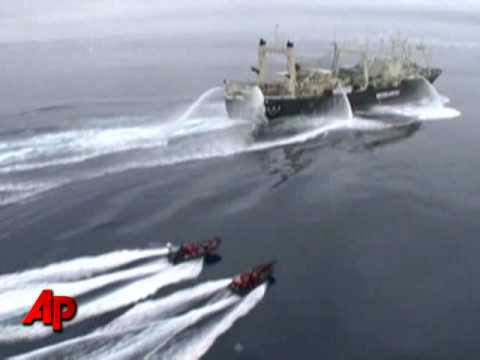 Raw Video: Whalers 'Launch Attack' in Antarctic