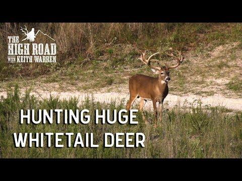 Hunting Huge Whitetail Deer & Management Secrets