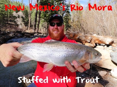 Trout Fishing New Mexico's Rio Mora River