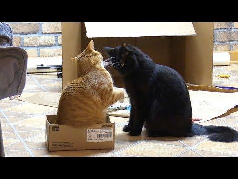 Epic Cat Standoff