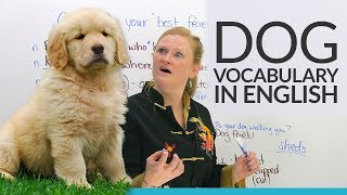 Real English: Taking care of your pet DOG!