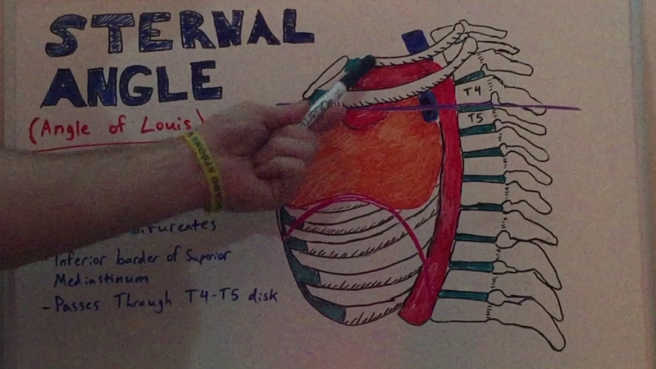 Sternal Angle - Anatomy Lecture for Medical Students - USMLE Step 1 ...