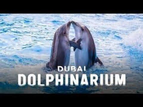 Dubai Dolphinarium: Dolphin Show :  Bringing Fun, Joy & Happiness