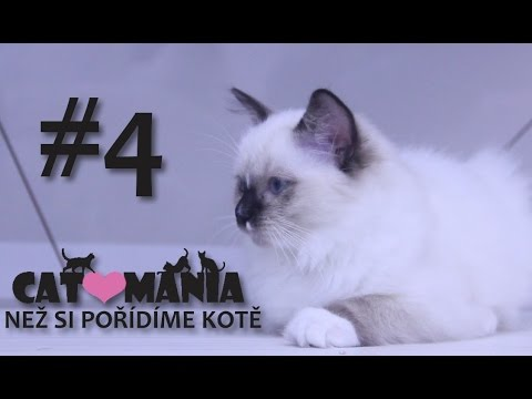Než si pořídíme kotě // CAT-MANIA #4