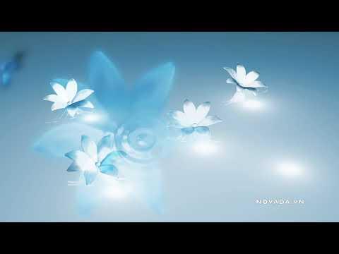 Nhạc thiền chữa lành tổn thương tâm hồn và tiềm thức - 3h thư giãn để đạt được hạnh phúc đích thực