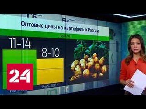 Россияне активно интересуются где и во сколько смотреть