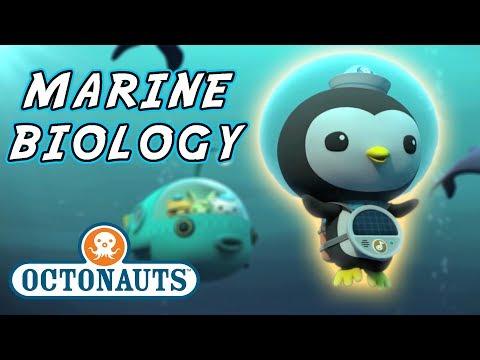 Octonauts - Marine Biology | Cartoons For Kids | Underwater Sea Education