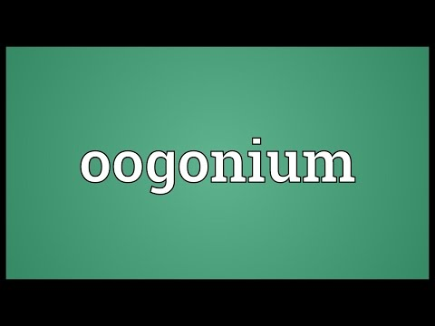 Header of oogonium