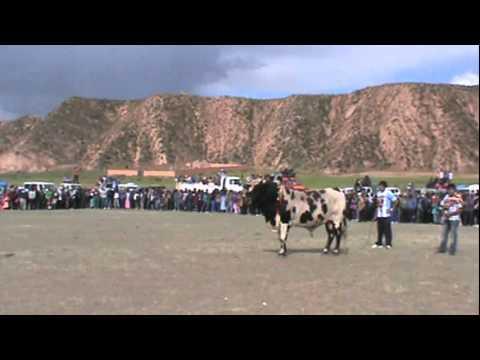 peleas de toros sanpedro de totora roruro bolivia 2012