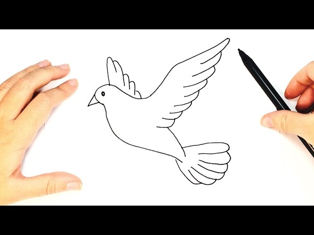How To Draw A Dove For Kids Dove Drawing Tutorial Youtube