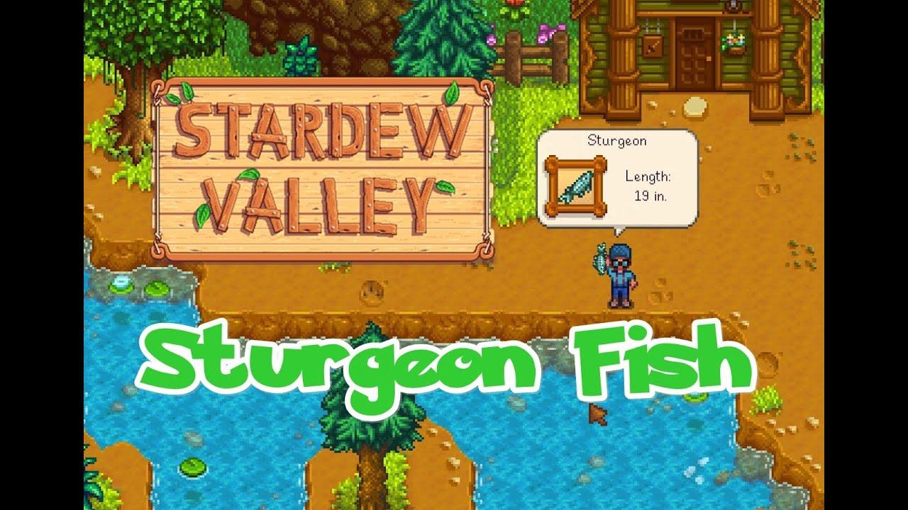Sturgeon Fish Stardew Valley À¸›à¸¥à¸²à¸«à¸² À¸•à¸ À¸¢à¸²à¸ Youtube