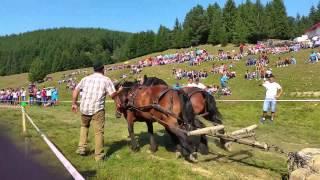 caii lui Ion Olaru de la Ladauti