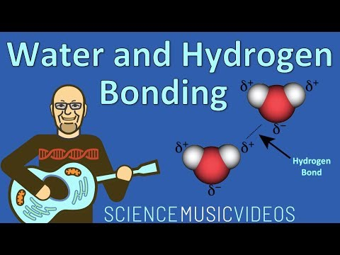 Water And Hydrogen Bonding