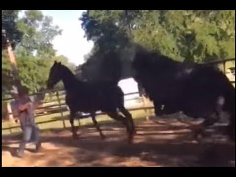 Mare Horse Kills Stallion By Accident - Horse Breeding Gone Bad -