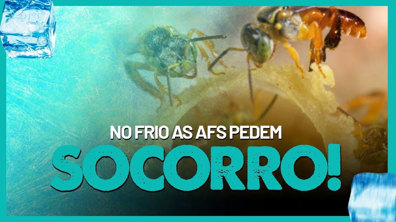 ❄️ AS ABELHAS SEM FERRÃO estão pedindo SOCORRO!❄️