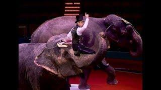 На манеже Ярославского цирка премьера - шоу слонов
