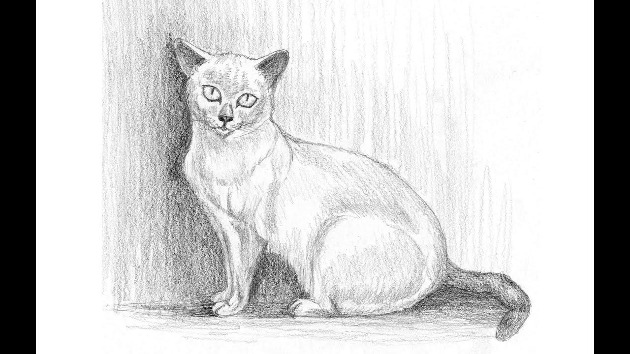 Cómo Dibujar Un Gato (Explicado paso a paso)