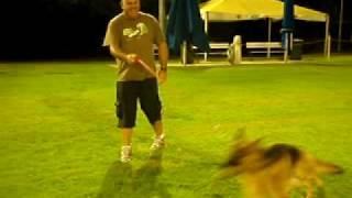 Brisbane Centre For Dogs - Dog Obedience Training