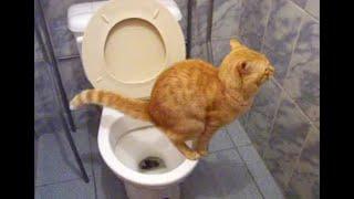 Repeat youtube video Gato en el baño