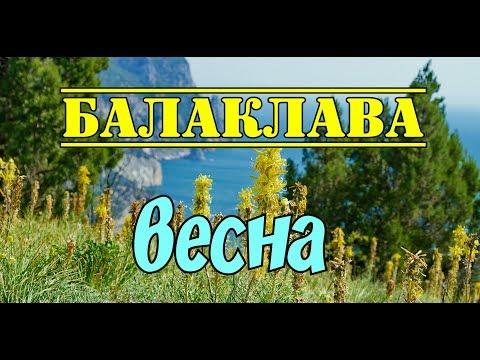 Цветущий ослинник|Балаклава|Весна|Katerina Volna