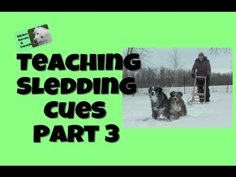 Teaching Your Dog Sledding Cues - Part 3