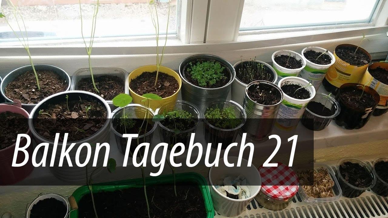 balkon tagebuch 21 ringelblumen keimen die kresse w chst und w chst youtube. Black Bedroom Furniture Sets. Home Design Ideas