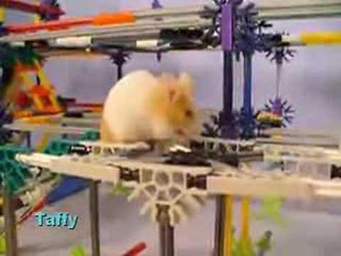 Mice At Play