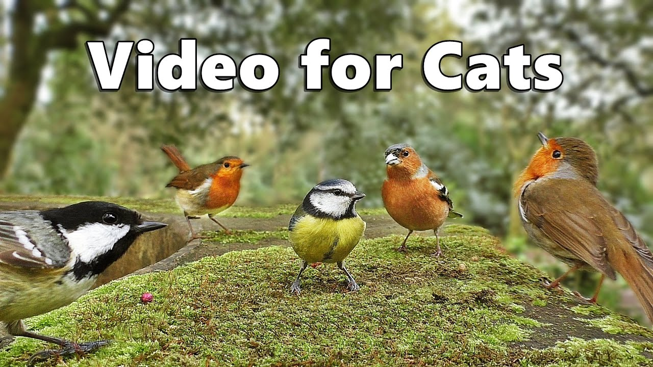 Videos for Cats to Watch - Birds Singing and Bird Sounds Spectacular