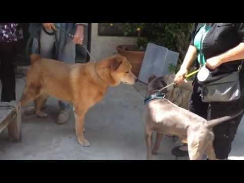 three-dog-patients-meet