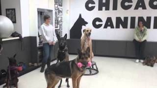 Learn To Train Your Dog | Chicago, Il – Chicago Canine Academy