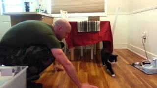Cats Welcoming Home Soldiers (parody video)