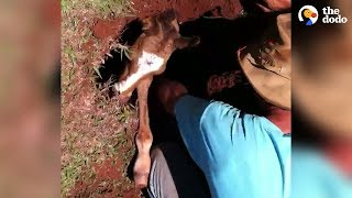 Guys Drop Everything To Save A Baby Horse | The Dodo