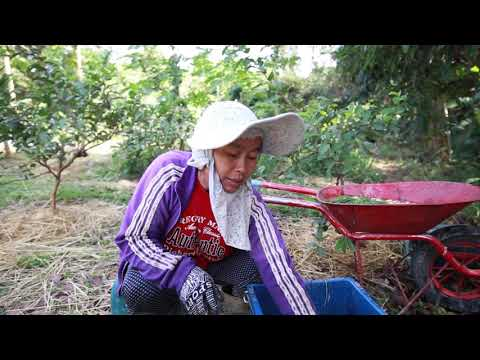 Determined woman builds her life around farming