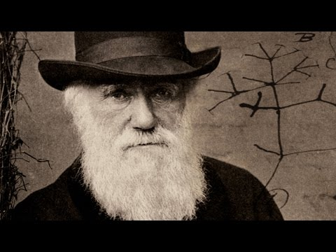 Lines of Thought: From Darwin to DNA