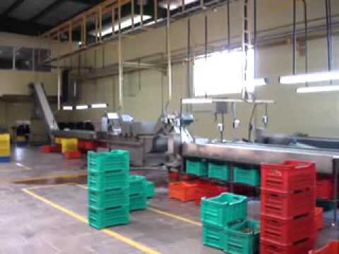 Sujay Industries Gherkin Processing Machinery Cleaning, Sort
