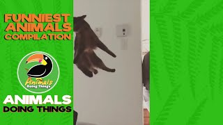 funny animals videos