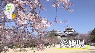 愛媛県の移住プロモーション映像(愛媛県全体編)です。