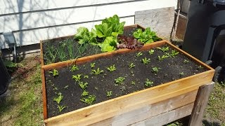 Raised Beds And Garden