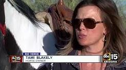 Neighbors in Rio Verde feud over horses