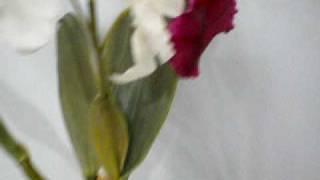 artificial flower orchid cattleya