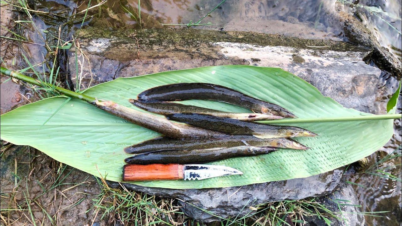 Chuyến Đi Câu Cá Lăng Chấm 10 Triệu Trong Rừng