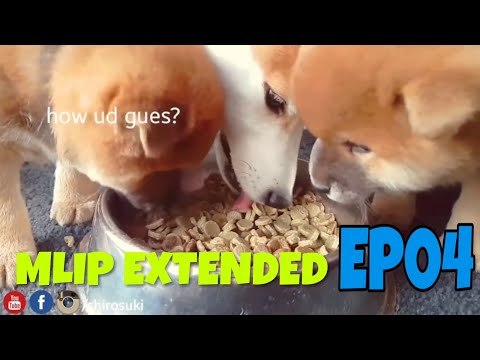 MLIP extended cuts - Ep 04 / Shiba Inu puppies