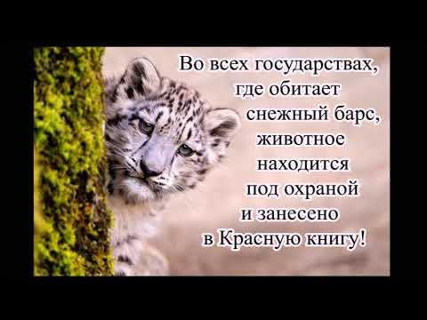 Доклад, сообщение о животном из красной книги России.