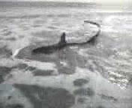 Myrtle Beach Shark 2