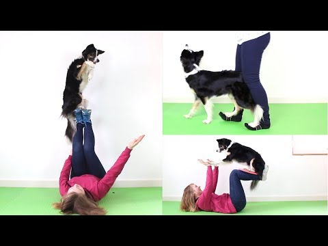 130 Dogtricks performed by Ordinary Jane