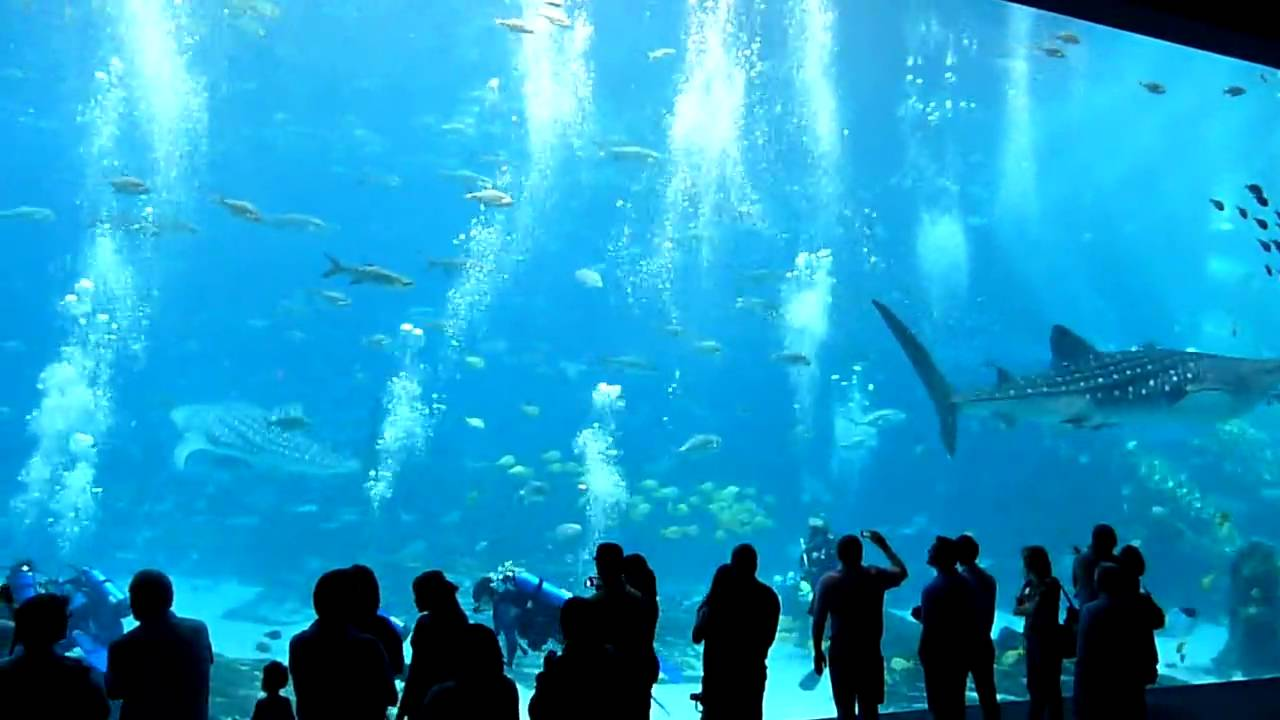 World 39 S Largest Aquarium Big Tank Atlanta Youtube