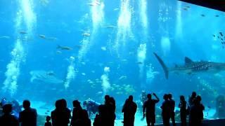World's Largest Aquarium Big Tank, Atlanta