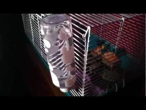How To Put A Water Bottle On A Cage.