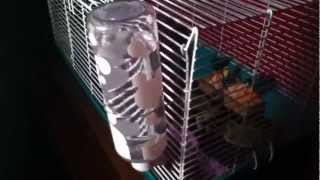 Don't Put Dry Ice In A Coke Bottle!!