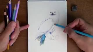 Букля из Гарри Поттера - рисунок карандашами